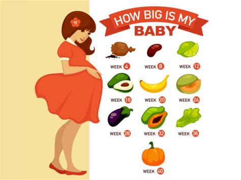 how big is a how big is your baby the size of your baby during various stages of pregnancy boldsky com