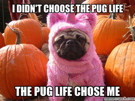 Pug Life Meme - pug memes