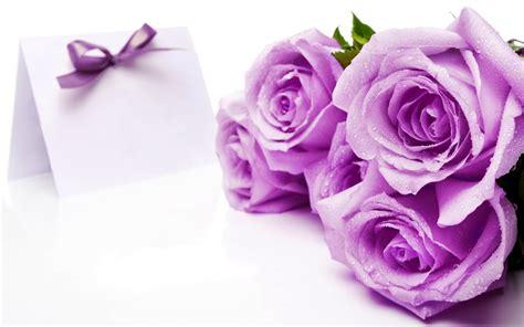 wallpaper bunga warna ungu koleksi gambar bunga mawar terindah yang belum ada ketahui