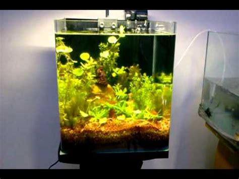 aquarium design youtube fengshui vastu nano live planted aquarium design jabbar