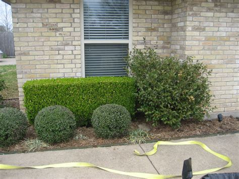 landscaping bushes for front of house boxwood shrubs for front of house