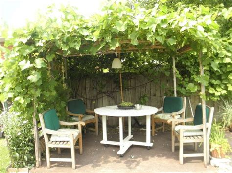 backyard grape vine trellis designs grape trellis potager pinterest
