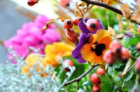 wann wachsen backenzähne h 252 bsche balkonpflanzen f 252 r die kalte jahreszeit