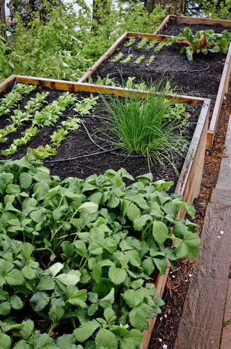 Terrace Vegetable Garden Vegetable Farming On Terrace Images
