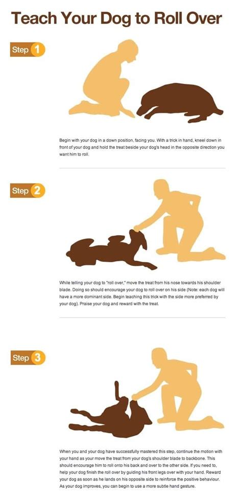 how to teach your to roll how to teach a to roll tips and tricks for you and your pooch