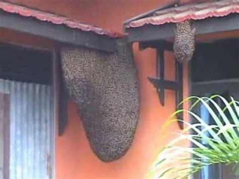 membuat rumah lebah madu mencari jalan pulang penawar dari lebah madu untuk manusia