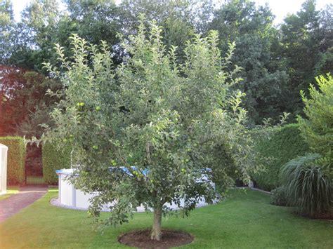 wann schneidet apfelbã ume apfelbaum schneiden wann b ume obstb ume apfelbaum