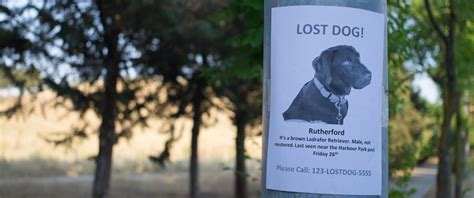 what to do if you find a lost what to do if you find a lost pet floofins co