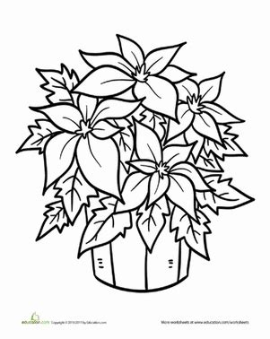 poinsettia coloring page pdf poinsettia coloring pictures only coloring pages