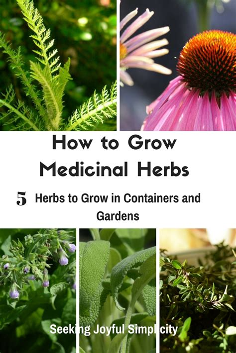 how to grow herbs how to grow herbs and 28 images 13 herbs to grow in