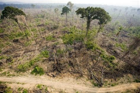 brazil fights illegal logging to protect amazon natives