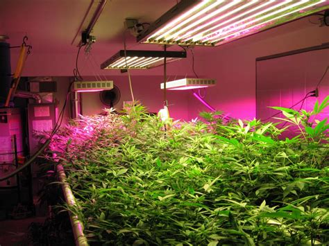 Growing Lights by How Artificial Plant Lights Will Help Growing Your Plants