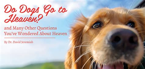 do dogs go to heaven do dogs go to heaven davidjeremiah org