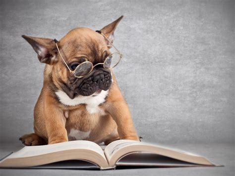 dog reading  book wallpapers  images wallpapers