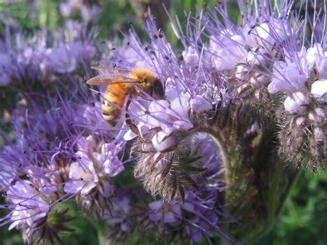 Bee Garden Flowers Sowing Up A Bee Friendly Flower Bed Higgledy Garden