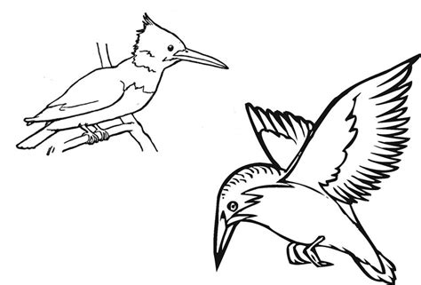 kingfisher coloring pages kingfisher colouring page free printable image