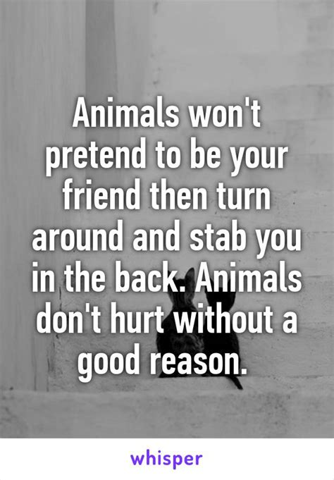 Are You Upset When A Recipe Doesnt Turn Out Right by Animals Won T Pretend To Be Your Friend Then Turn Around