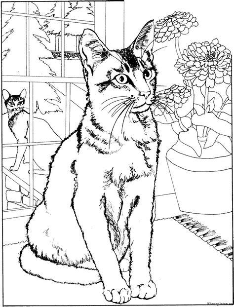 coloring pictures of big cats poezen en katten kleurplaat 331136 kleurplaat