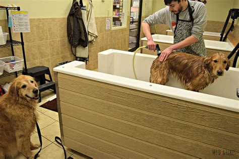 dogs and bathtubs how to bathe a dog a step by step guide