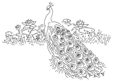 indian peacock coloring page laura wheeler design 664 peacocks q is for quilter