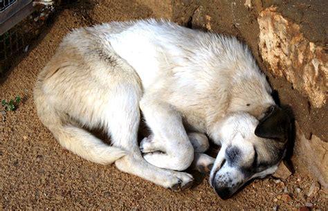 sleep puppy file sleeping jpg