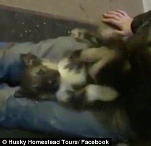 i hit my puppy will it forgive me snowmobiler arrested for crashing into teams in alaska s iditarod sled race