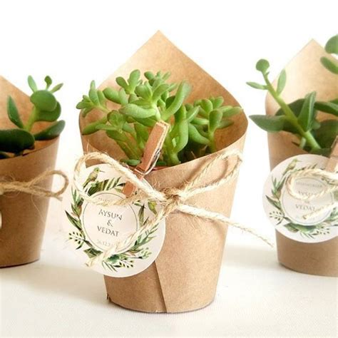 Wedding Gift Plant by 25 Best Ideas About Succulent Favors On