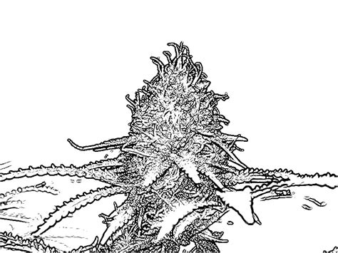 marijuana leaf 420 coloring pages coloring pages