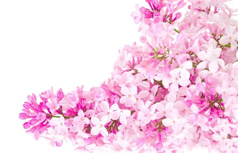 Pictures Of Pink Flowers - pink flowers pink color photo 23830799 fanpop