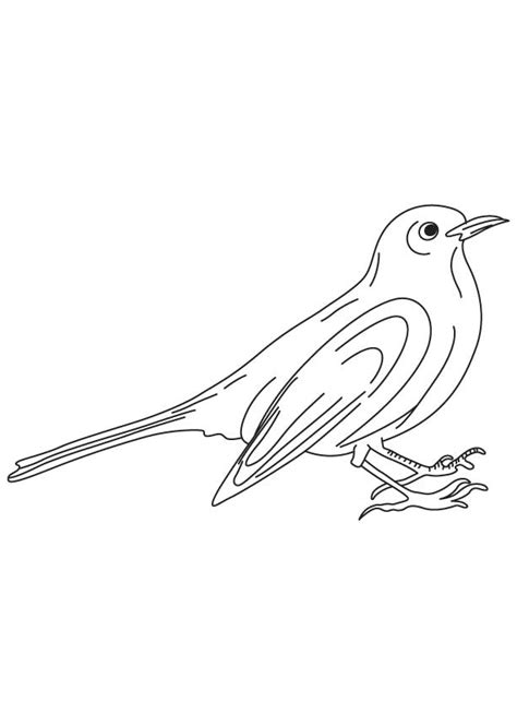 black bird coloring page black birds colouring pages