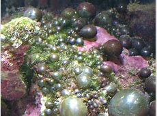 Types of Algae in a Saltwater Aquarium and How to Prevent ... Algy