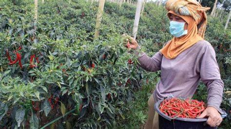 pengertian jenis  manfaat tanaman hortikultura