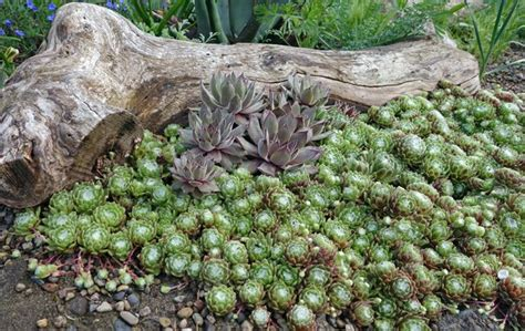 plants for a rock garden how to create a rock garden mnn nature network