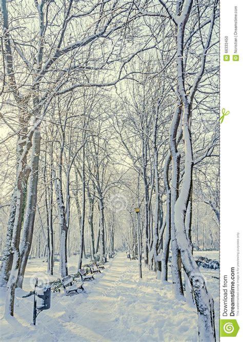 banken pool openbaar die park europa met bomen en takken met