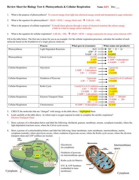 Cellular Respiration Worksheet Pdf Answer Key