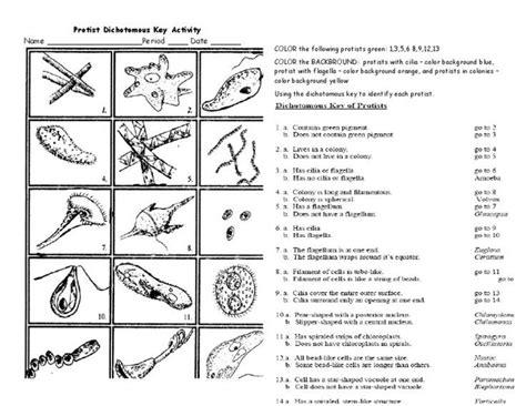 Dichotomous Key Worksheet by Protist Dichotomous Key Worksheet Activity The Biology Classroom Dichotomous Key