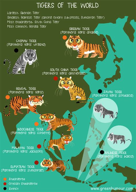 Green Humour: Tigers of the World