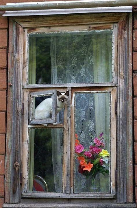 cat door window meowcats