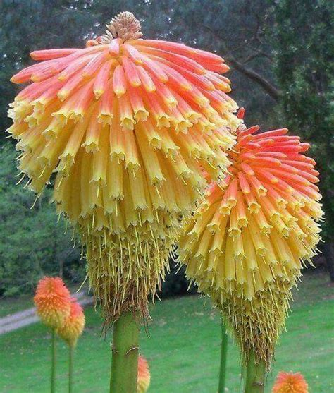 unusual flowers 25 best ideas about unusual flowers on pinterest