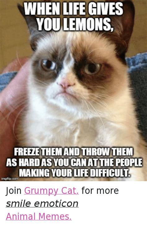 grumpy cat joins cats on 25 best memes about juice juice memes