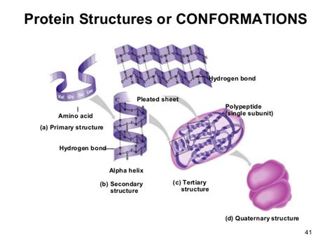 protein quaternary structure bonds information about cell and it s structure and protein
