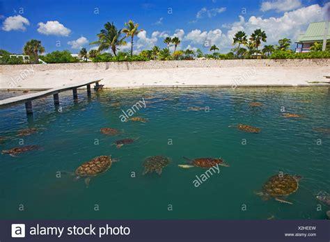 boatswain s beach grand cayman cayman turtle farm stock photos cayman turtle farm stock