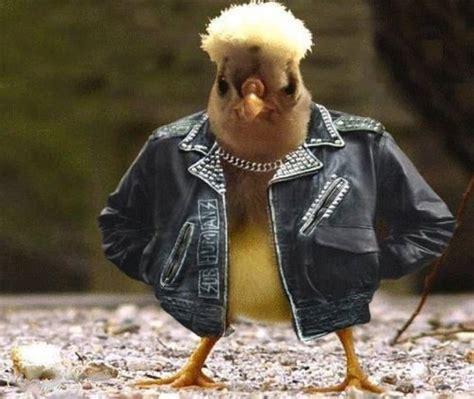gangster chicken jokeitup com