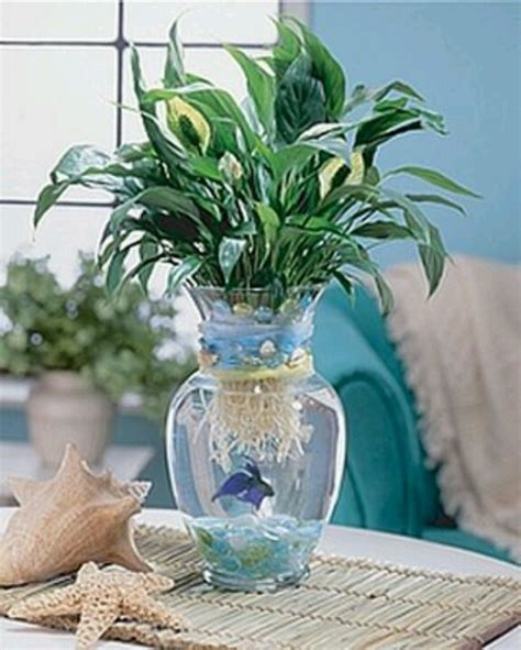 betta vase best 25 vase fish tank ideas on betta fish