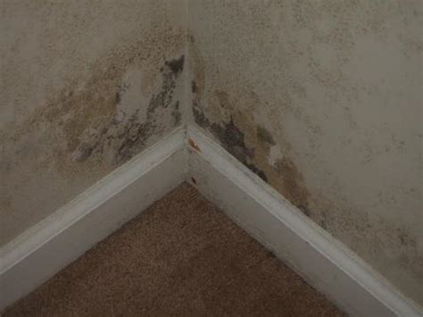 basement mold and mildew mold remediation steps cleaning tips homeadvisor