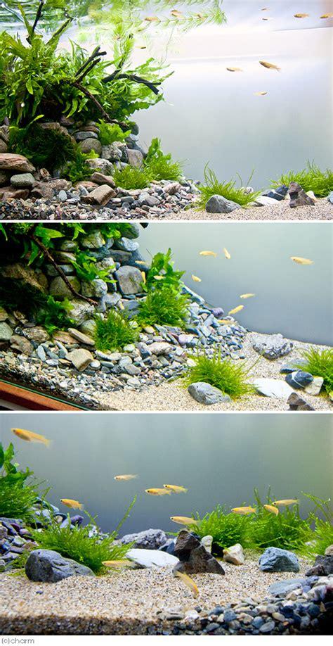 aquascape qatar chanet rakuten global market freshwater fish honshu