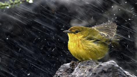 images of love birds in rain full hd wallpaper bird heavy rain close up desktop