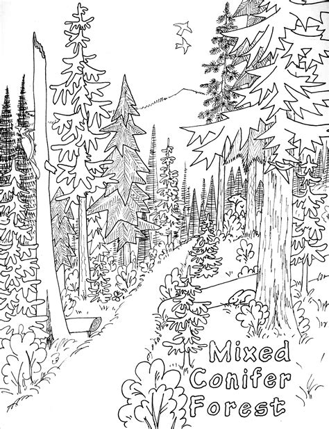 Coloring Page Nature by Free Printable Nature Coloring Pages For Best