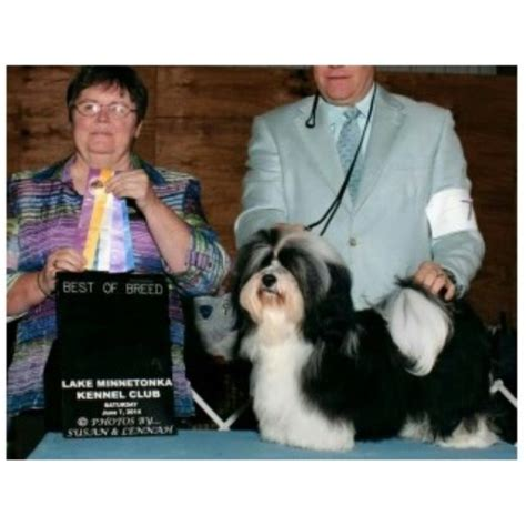 steel city havanese havanese breeders in the usa and canada freedoglistings page 1