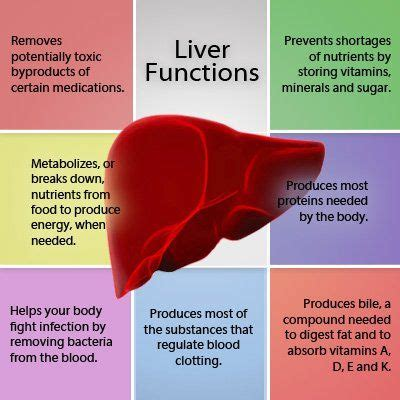 How To Detox Liver Regimen by Best 25 Liver Bile Ideas On Gallbladder Flush
